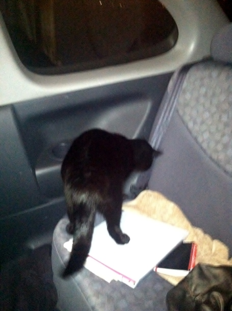 Black Cat Gets Frisky In the Backseat of the Ghetto Echo
